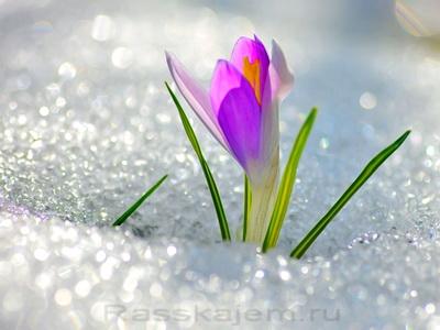 Весна идёт