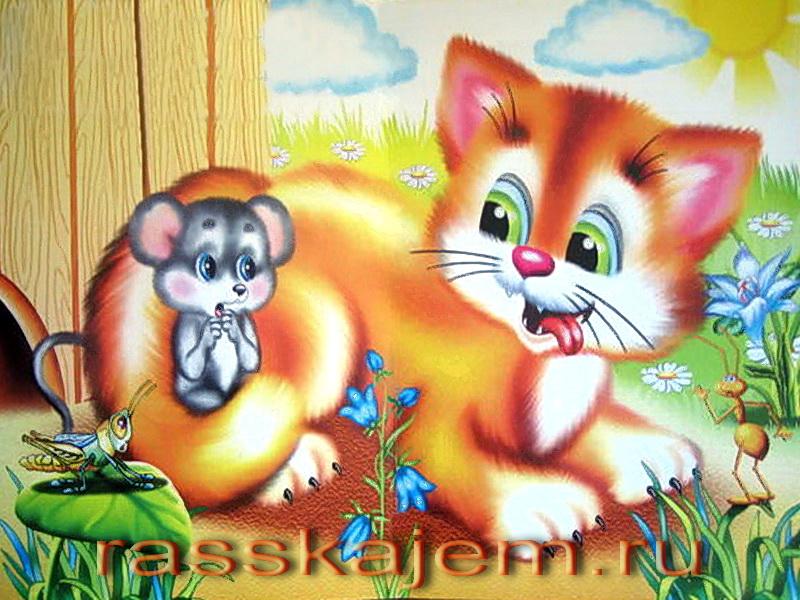 котауси и мауси
