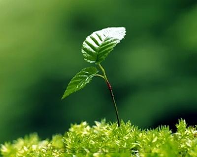 Будущий лес-02