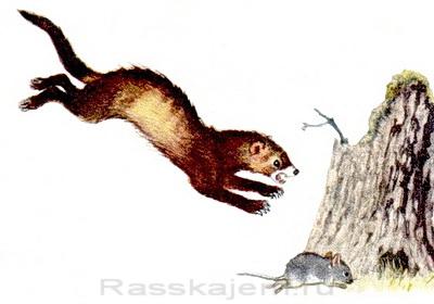 Сказка об умном мышонке-08-1