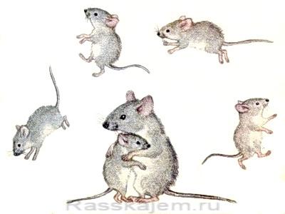 Сказка об умном мышонке-16