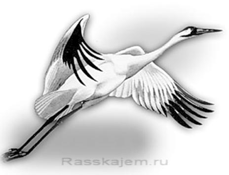 Думы-02