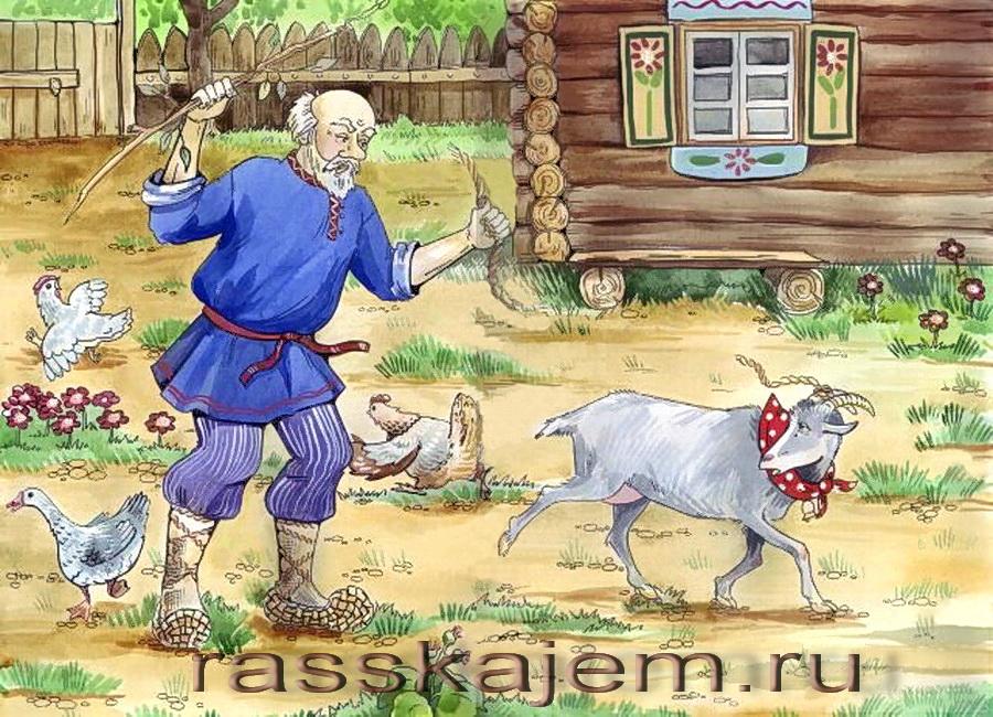 коза дереза-2