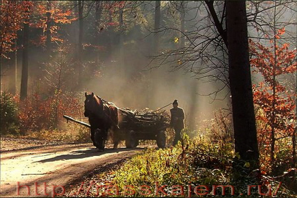 мужичок повёз дрова http://rasskajem.ru/