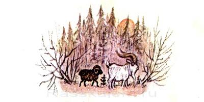 Козёл и баран-05